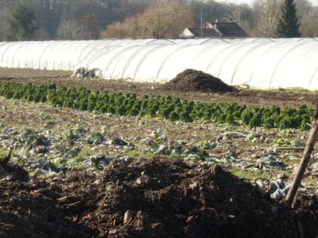 Compost frais sur culture