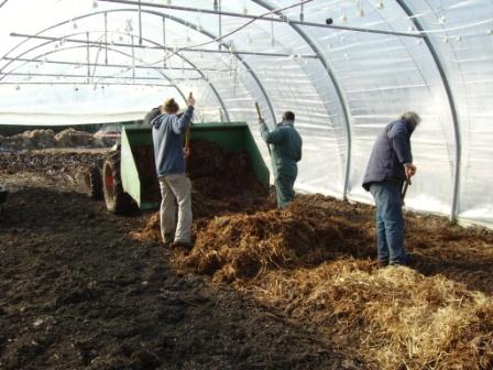 Paillage sur compost pour tomates