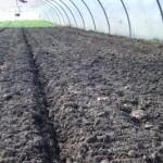 Compost pour pommes de terre nouvelles