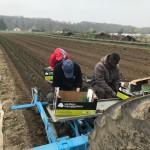 Plantation de poireaux 1