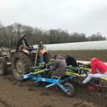 Plantation de poireaux 2
